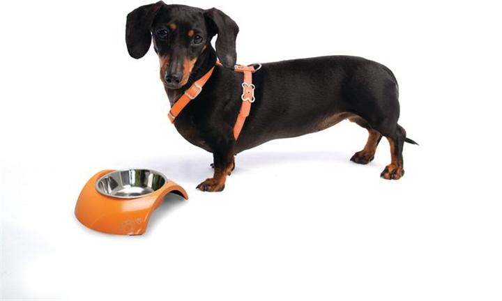 Hyperli | Rogz Lapz 13mm Luna Adjustable Dog H-Harness (Small) for